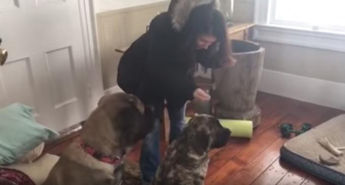 仲間に「お座り」を教える犬