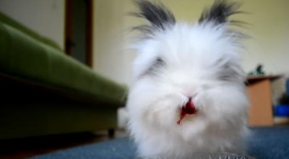 『モフモフな白ウサギ』に『ジューシーなイチゴ』をあげたらホラーになった