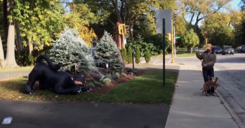 散歩中の犬が「大きな黒猫」の置物と出会った時のリアクションがおもしろい!