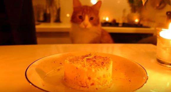 愛猫のための手作りご飯が凄すぎる!