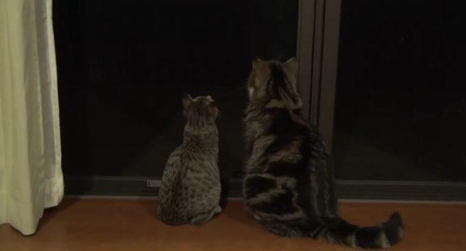 大小2匹の猫。後ろ姿が微笑ましい〜