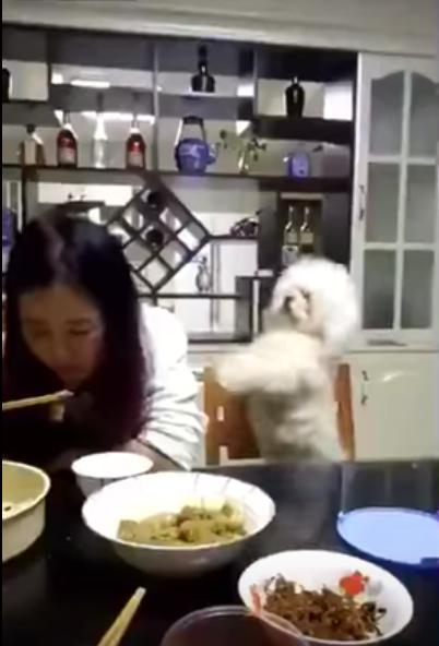 可愛くご飯をおねだりする愛犬ですが・・・