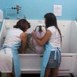 ここにもいた!お風呂中「アワアワ」言う犬