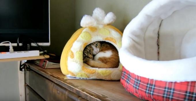 ギュウギュウに詰まった猫まんじゅうの動画