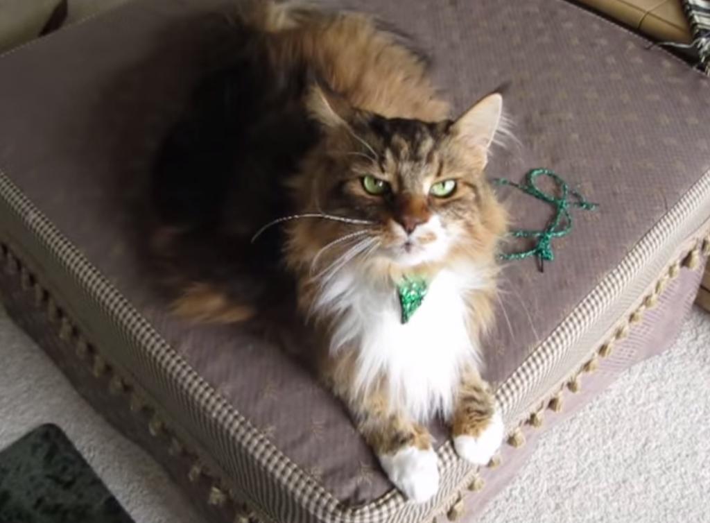 「キラキラ星」の歌で合いの手ができる猫の動画