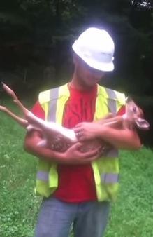 お姫様抱っこにうっとりしている子鹿がカワイイ