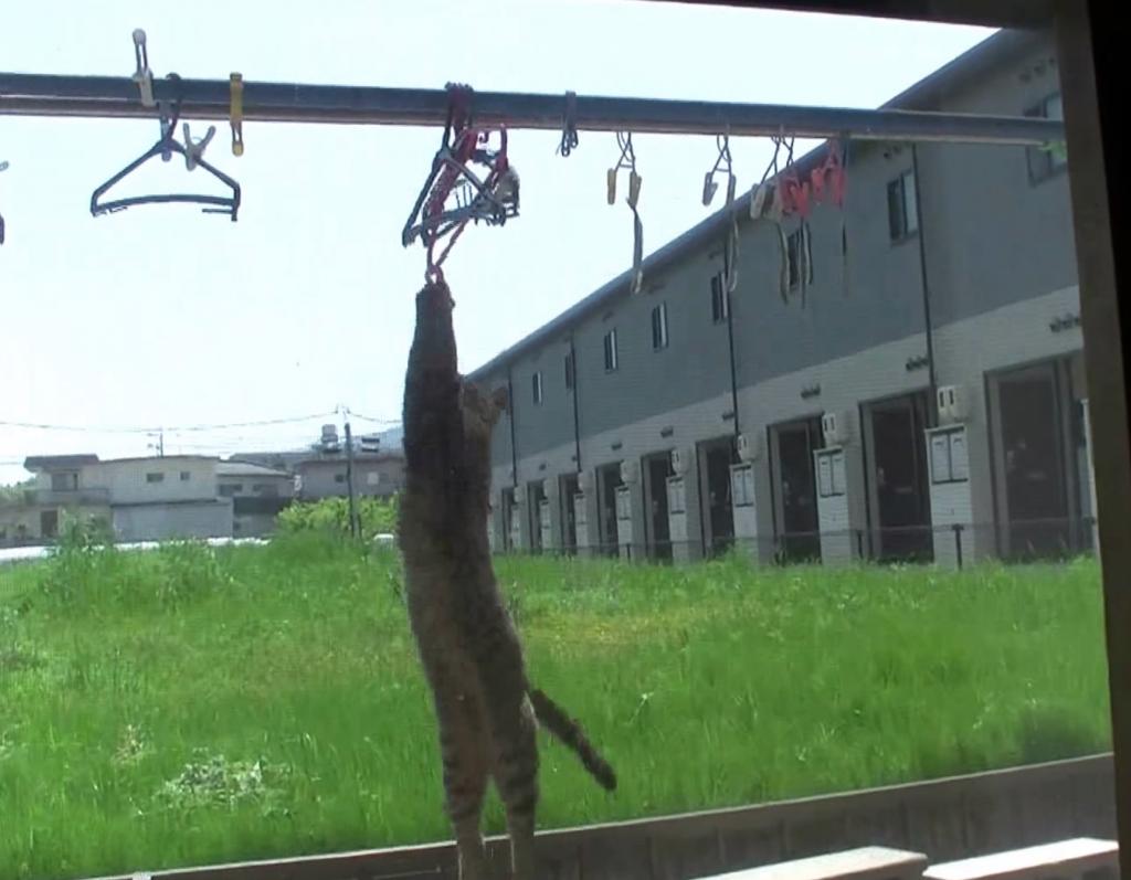 そこ間違える?!魚と勘違いしてハンガーに何度も飛びつく超天然の猫あらわる