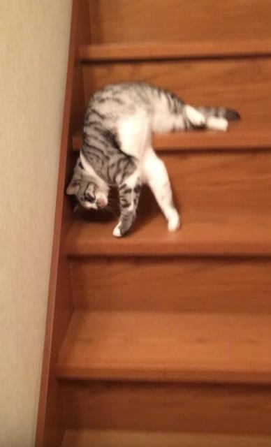 猫の流動体バージョン