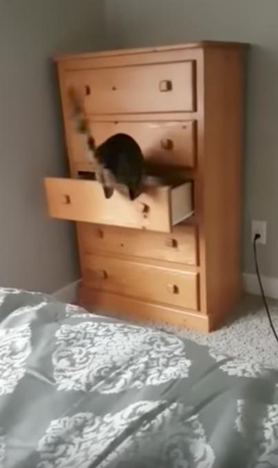 タンスの引き出しの中に完璧に隠れる猫