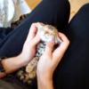 マッサージをされて幸せそうな顔をしている猫