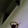 ゴールは俺に任せろ!バスケットが上手い猫が凄い