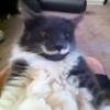 お手本のような完璧な「白ひげ」の猫あらわる