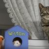 猫とインコとハムスターが仲良しな平和な世界