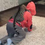 乗馬ならぬ乗人間がご趣味な猫