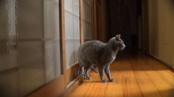 早く開けてよ〜!ノックが段々早くなる猫がカワイイ