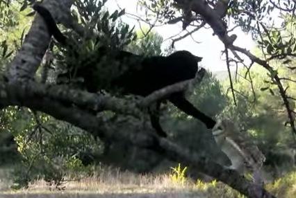 黒猫とフクロウが仲良しでほのぼのする動画