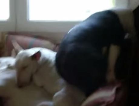 そんなとこで寝れるの!?寝相が凄い犬の動画