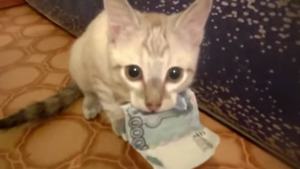 子猫がお金を返してくれない。。
