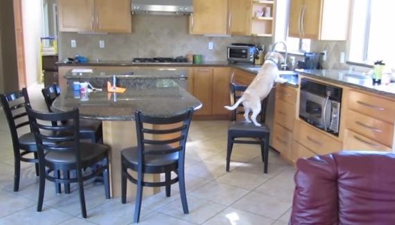 チキンナゲットをゲットするための犬の行動が賢い!
