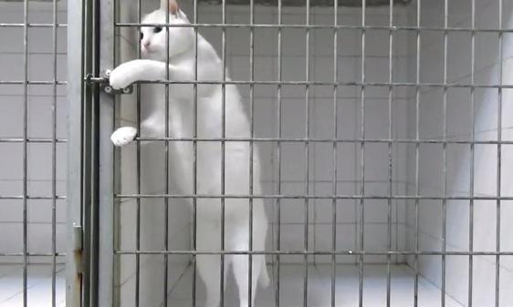 脱獄常習の猫。その手口とは?!