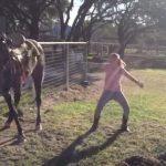リズミカルな音楽に合わせてノリノリで踊る馬