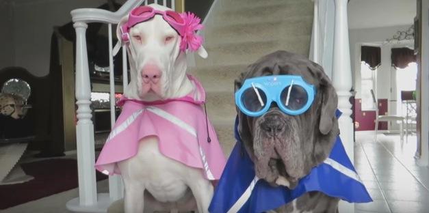 おしゃれ?なレイングッツを着せられているイカツイ犬たち
