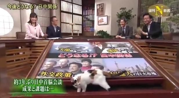 目が離せない!テレ東ニュース番組の2代目看板猫「にゃーにゃ」