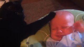 泣いている赤ちゃんをあやす猫が素敵!