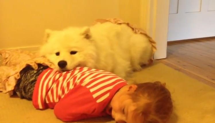 モフモフ犬と女の子がごろごろしている姿がカワイイ