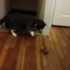 猫の身体能力の高さが悲惨な結果を生む瞬間