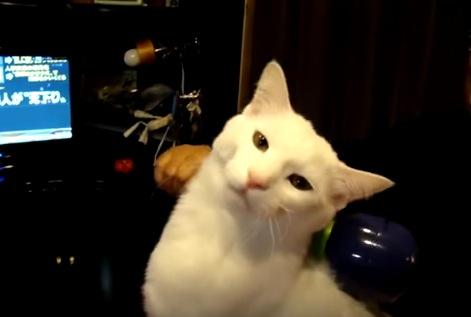 肩たたきに超うっとりする猫