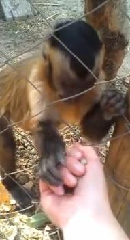 落ち葉を握って!とせがむお猿さんがカワイイ