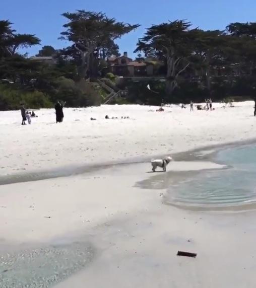 海でテンションMAXな犬に待ち受けていた落とし穴とは。。。
