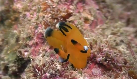 海の宝石〜美しいウミウシの動画