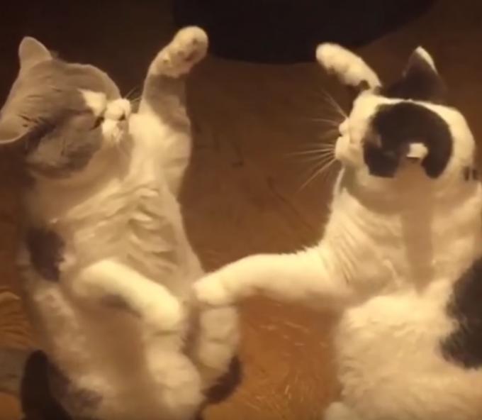 鏡・・じゃないよね?!2匹の猫のシンクロ率が高すぎる動画