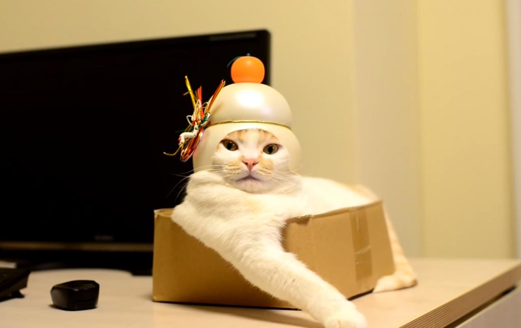 立派な鏡餅になった猫