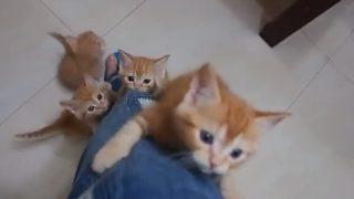 ご主人様の近くにいたい!子猫が次々と足を登ってくる姿に胸キュン