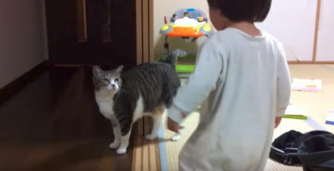 赤ちゃんと遊んであげるベビーシッター猫にほっこり