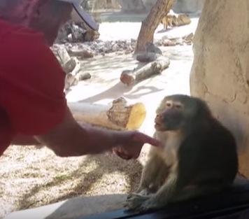手品をすると超いいリアクションをするお猿さん