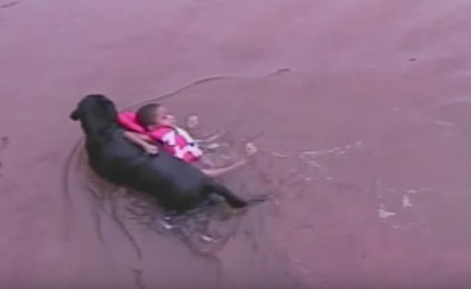 使命感強すぎ?!水遊び中の子供を救出するレスキュー犬