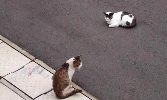 「猫が友達になる瞬間」が心温まる