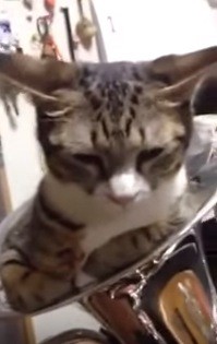 猫を「ユーフォニューム」に入れて演奏してみた