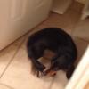 犬が自分の尻尾を咥えて社交ダンスのようにクルクル回っている件