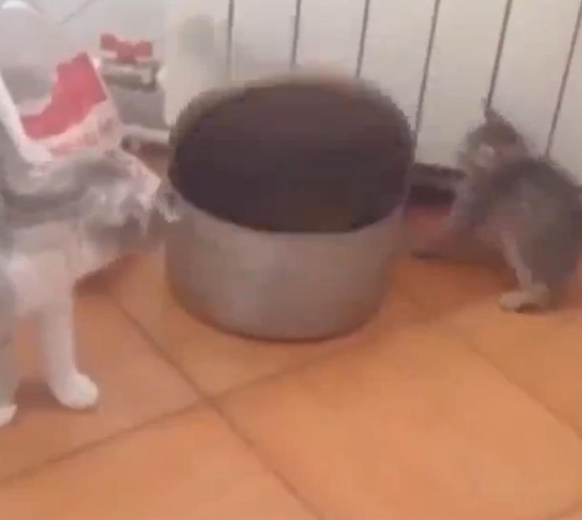 鍋の上で遊んでいた子猫が鍋に吸い込まれた瞬間!