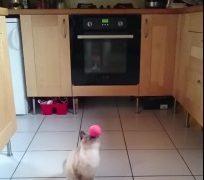 飛んできたボールを顔面キャッチした鈍臭い猫