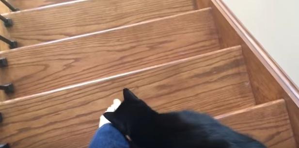 階段を降りる度にシリシリと足にまとわりつく猫
