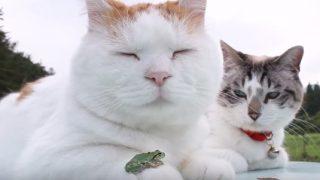 手にカエルを乗せてお昼寝中の猫
