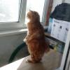 二本立ちで窓の外を眺める猫らしからぬ猫