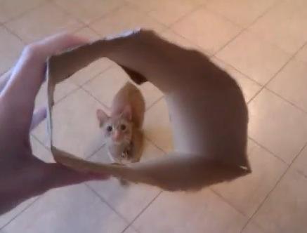 猫に段ボールの輪を見せたら。。。凄い技を披露!