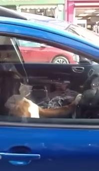 車内に取り残された犬が飼い主さんを呼ぶため?!にした行動とは。。